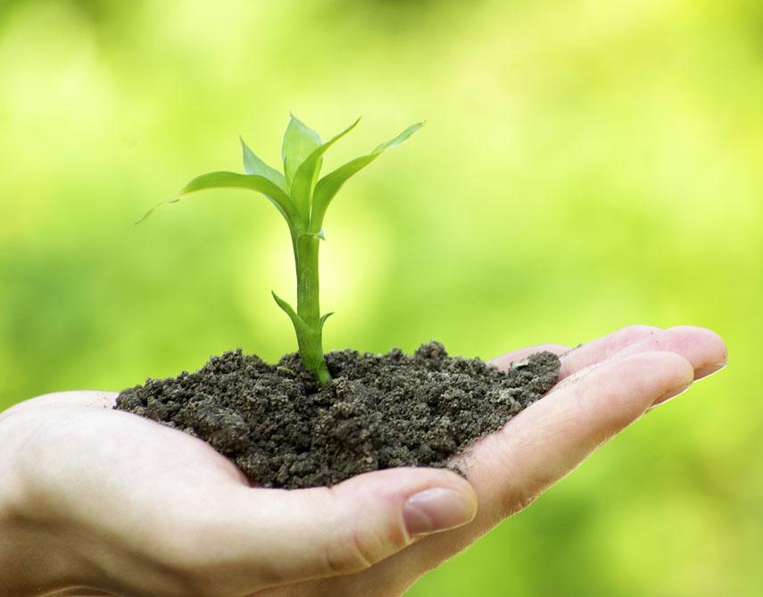 """植物生长""""营养专家"""" — 飞速直播吧cba有益微生物"""