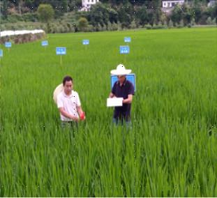 国家杂交水稻工程技术研究中心项目
