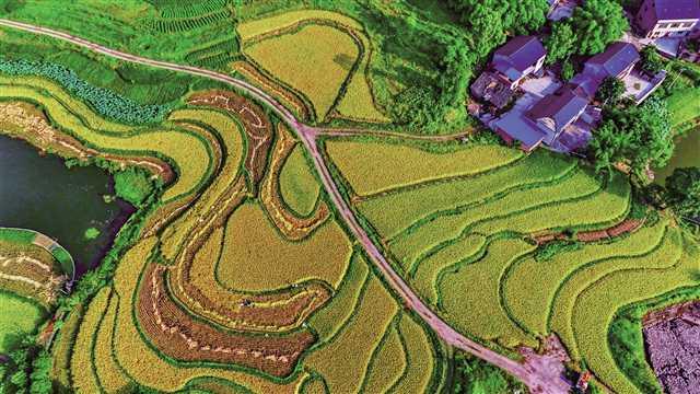 科学人工补硒是标准化生产富硒农产品的唯一途径